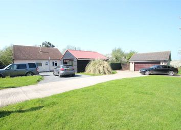 Thumbnail 4 bed bungalow for sale in Outspan, Dairy Farm Meadow, St Osyth