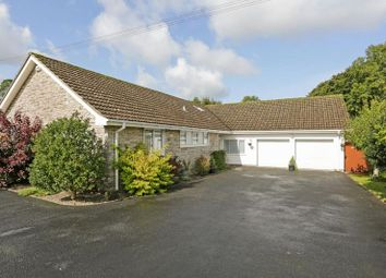 Thumbnail 4 bed bungalow for sale in Bleke Street, Shaftesbury