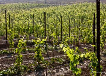 Thumbnail Land for sale in Montalcino, Tuscany, Italy