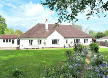 Thumbnail 4 bed bungalow to rent in Roman Road, Kilmington, Axminster