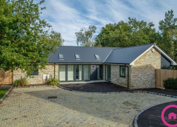 Thumbnail 3 bed detached bungalow to rent in Springbank Road, Cheltenham