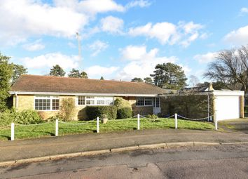 Thumbnail 4 bed bungalow to rent in Old Westhall Close, Warlingham