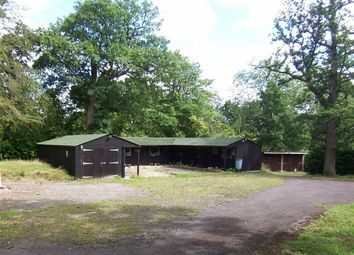 Thumbnail Equestrian property to rent in Ockley Road, Beare Green, Dorking, Surrey