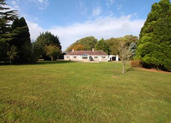 Thumbnail 5 bed detached bungalow to rent in Moulton Road, Cheveley