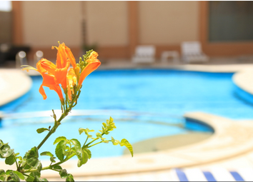 Thumbnail 1 bedroom apartment for sale in Hurghada, Qesm Hurghada, Red Sea Governorate, Egypt