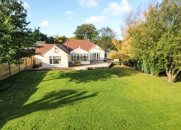 Thumbnail 4 bed detached bungalow for sale in High Street, Cheveley, Newmarket