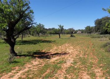 Thumbnail Land for sale in Close To Santa Bárbara De Nexe, Santa Bárbara De Nexe, Faro, East Algarve, Portugal