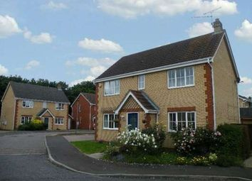 Thumbnail 4 bed detached house to rent in Lidgate Close, Orton Longueville