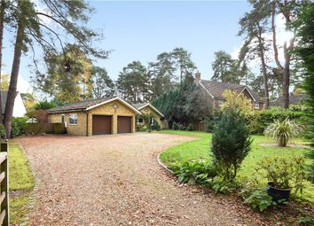 Thumbnail 3 bed detached bungalow for sale in Hollybush Ride, Finchampstead, Wokingham