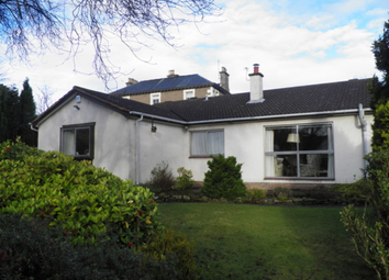 Thumbnail 3 bedroom bungalow to rent in Albany Road, Broughty Ferry, 1Nu