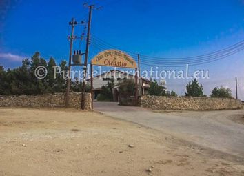 Thumbnail Commercial property for sale in Anogyra, Cyprus