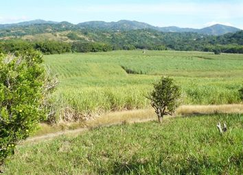 Thumbnail Farm for sale in Chapleton, Clarendon, Jamaica