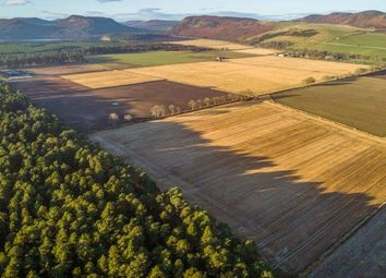 Thumbnail Farm for sale in Golspie, Sutherland