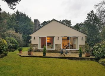 Thumbnail 3 bed detached bungalow to rent in Ashley Heath, Ringwood, Hampshire