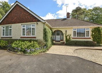 Thumbnail 4 bed detached bungalow for sale in Four Marks, Alton, Hampshire