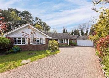 Thumbnail 3 bedroom detached bungalow for sale in Hurstwood, Ascot, Berkshire