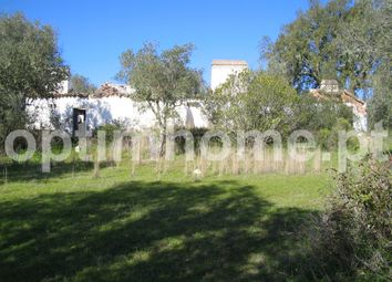 Thumbnail Farm for sale in Abertas De Baixo, Montargil, Ponte De Sor
