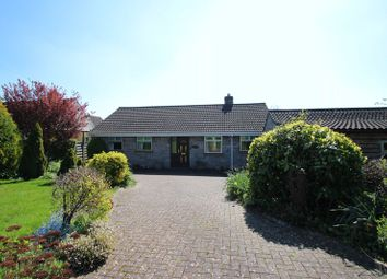 Thumbnail 4 bed detached bungalow for sale in Ridgeway, Ashcott, Bridgwater