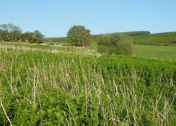 Thumbnail Land for sale in Kennels Cottage, Glentisset Road, Pettinain