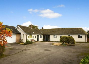 Thumbnail 4 bed detached bungalow for sale in Main Street, Brandesburton, East Yorkshire