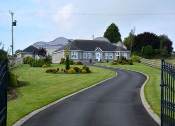 Thumbnail 4 bed bungalow for sale in Lurganville Road, Moira, Craigavon