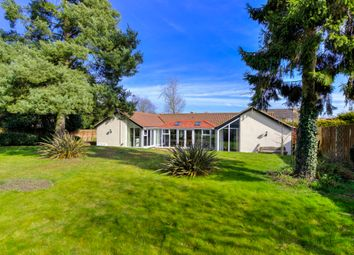Thumbnail 5 bed detached bungalow for sale in Stanton, Bury St Edmunds, Suffolk