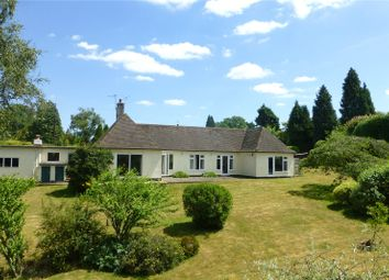 Thumbnail 4 bed detached bungalow for sale in Woodhouse Lane, Holmbury St. Mary, Dorking, Surrey