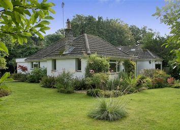 Thumbnail 3 bed detached bungalow for sale in Honey Lane, Burley, Ringwood