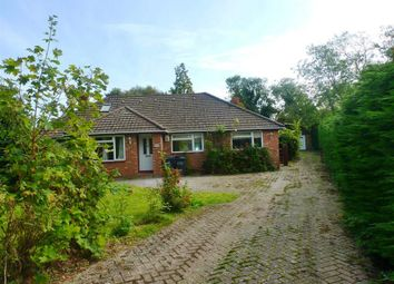 Thumbnail 4 bed bungalow to rent in Battle Road, Hailsham
