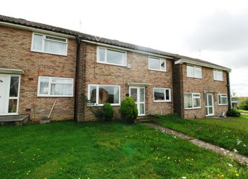 Thumbnail 4 bed property to rent in Dahlia Walk, Colchester