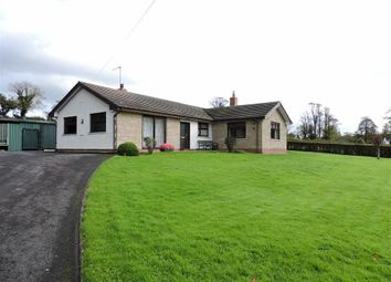 Thumbnail 3 bed detached bungalow for sale in Providence Hill, Narberth, Pembrokeshire