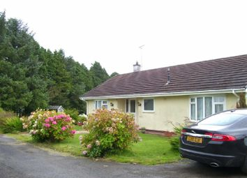 Thumbnail 3 bedroom detached bungalow for sale in Rhos, Llandysul
