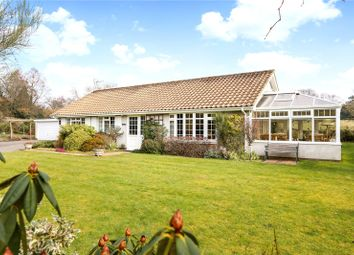 Thumbnail 3 bed detached bungalow for sale in Church Road, Bramshott, Liphook, Hampshire