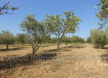 Thumbnail Land for sale in Sorède, Pyrénées-Orientales, Languedoc-Roussillon