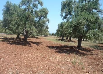 Thumbnail Land for sale in Land Giusy, Carovigno, Puglia, Italy
