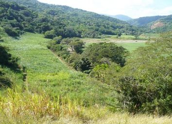 Thumbnail Farm for sale in Kellits, Clarendon, Jamaica