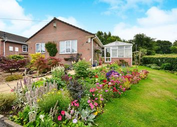 Thumbnail 3 bed bungalow for sale in Westland Drive, Pinxton, Nottingham