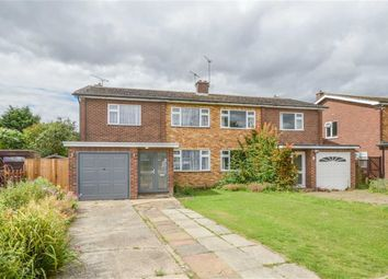 Thumbnail 4 bed semi-detached house for sale in Linwood Road, Ware, Hertfordshire