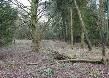 Thumbnail Land for sale in Land Adjacent To Dunbheagan, Dereham Road, Westfield, Dereham, Norfolk