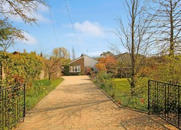 Thumbnail 4 bed detached bungalow for sale in School Lane, Great Wigborough, Colchester