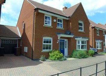 Thumbnail 4 bed detached house to rent in Crocus Close, Red Lodge, Bury St. Edmunds