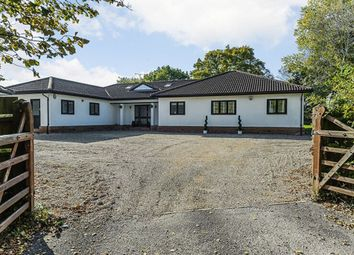 Thumbnail 5 bed detached bungalow for sale in Pledgdon Green, Henham, Bishop's Stortford