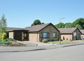 Thumbnail 3 bed detached bungalow for sale in St Johns Gate, Denny, Stirlingshire