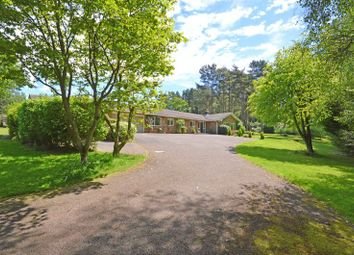 Thumbnail 4 bed bungalow to rent in Wheatsheaf Enclosure, Liphook