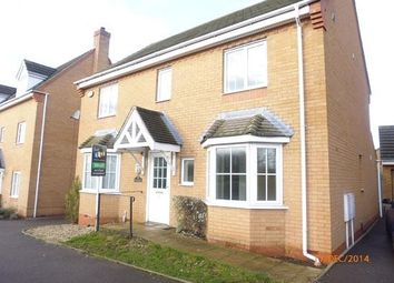 Thumbnail 4 bed detached house to rent in Buckthorn Road, Hampton Hargate, Peterborough