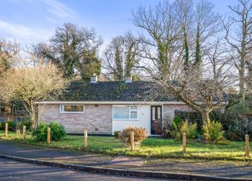 Thumbnail 3 bed bungalow for sale in Holton, Halesworth, Suffolk