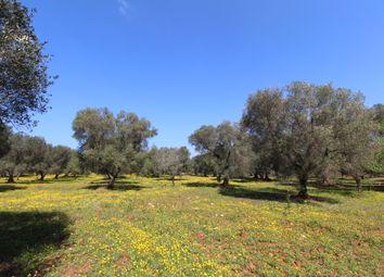 Thumbnail Land for sale in Contrada Macchia Grande, Carovigno, Brindisi, Puglia, Italy