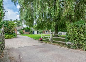 Thumbnail 4 bed detached bungalow to rent in Ginns Road, Stocking Pelham, Buntingford