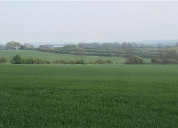 Thumbnail Land to rent in Beeston Leasoes Farm, Northill, Biggleswade