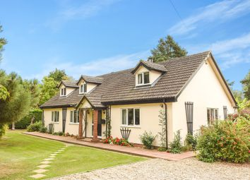 Thumbnail 4 bed detached bungalow for sale in Wayford, Norwich